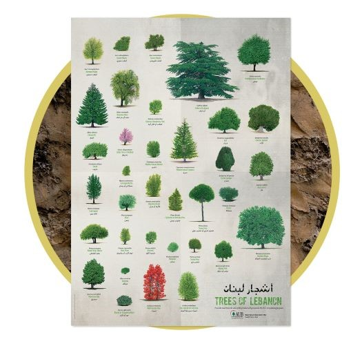 Trees of Lebanon Poster